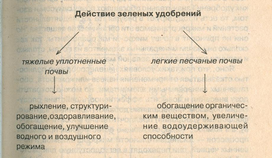 Действие сидератов