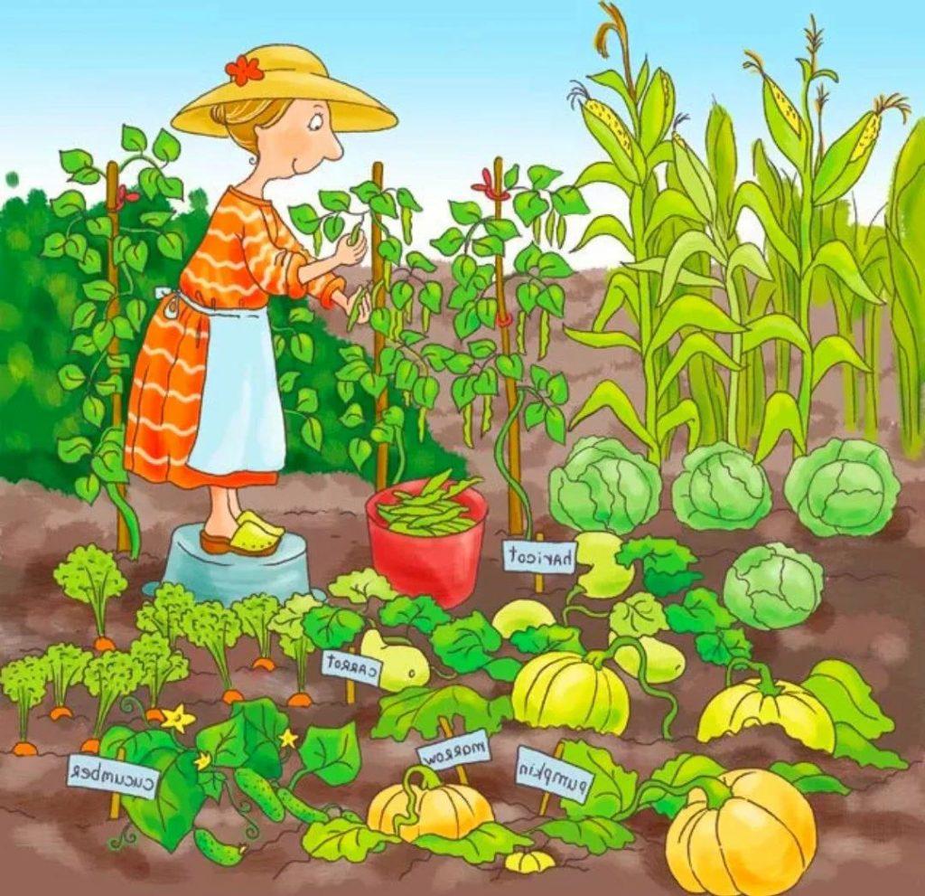 Агротехника смешанных посадок