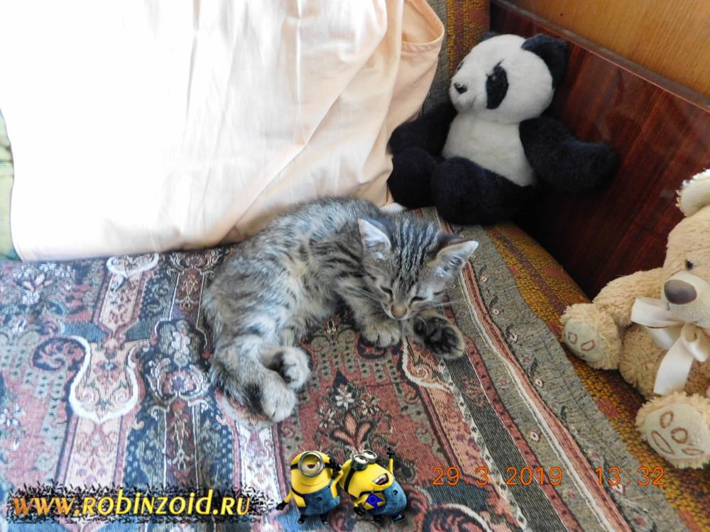 Котёнок на отдыхе