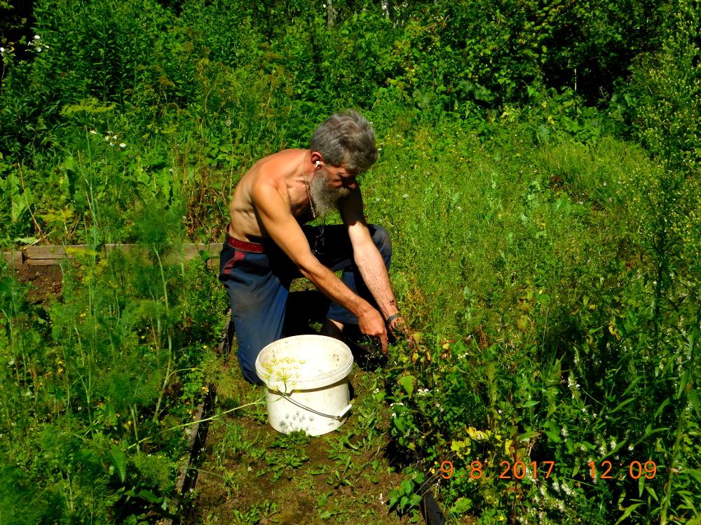 Борьба с сорняками и вредителями