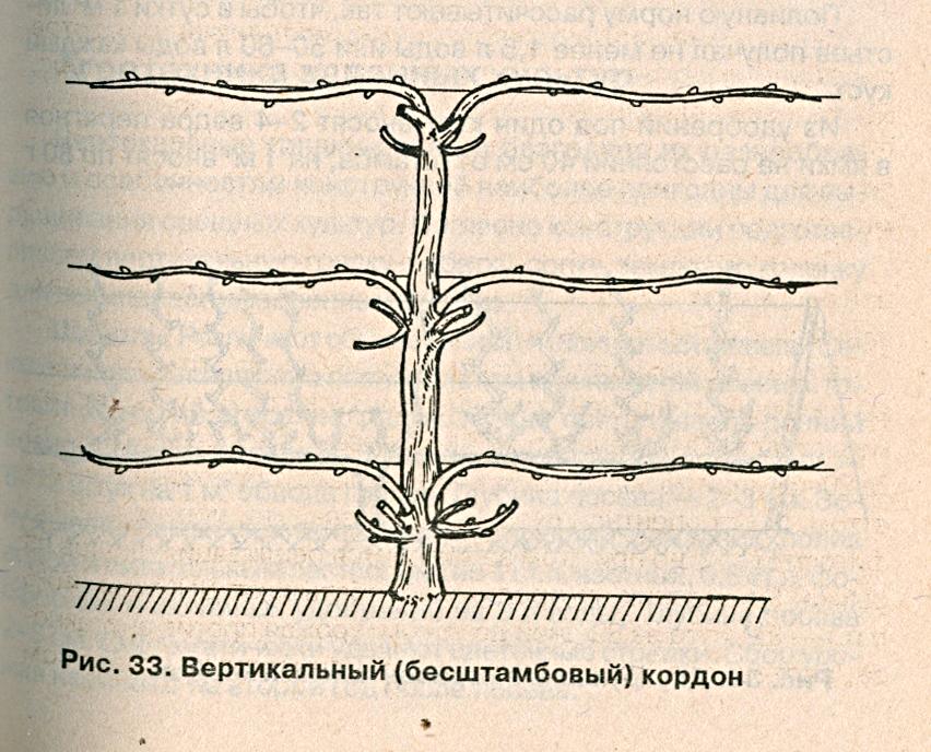 Вертикальный кордон
