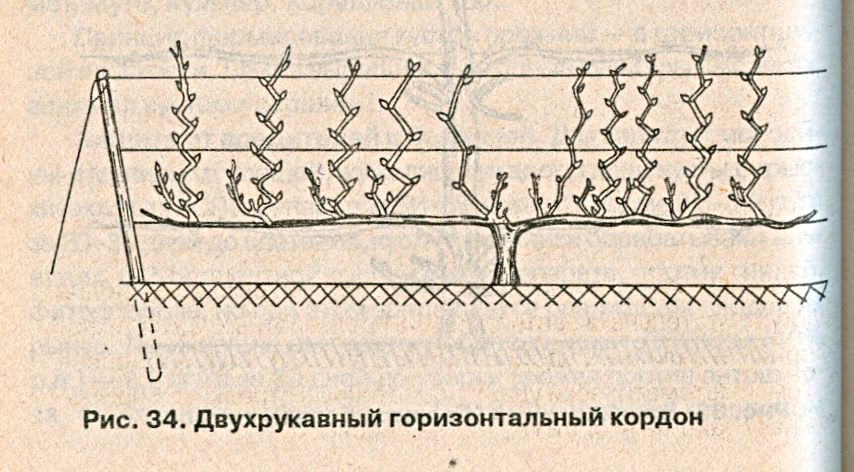Двухрукавный кордон